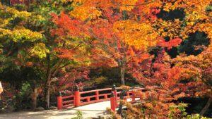 宮島もみじ橋の紅葉の画像