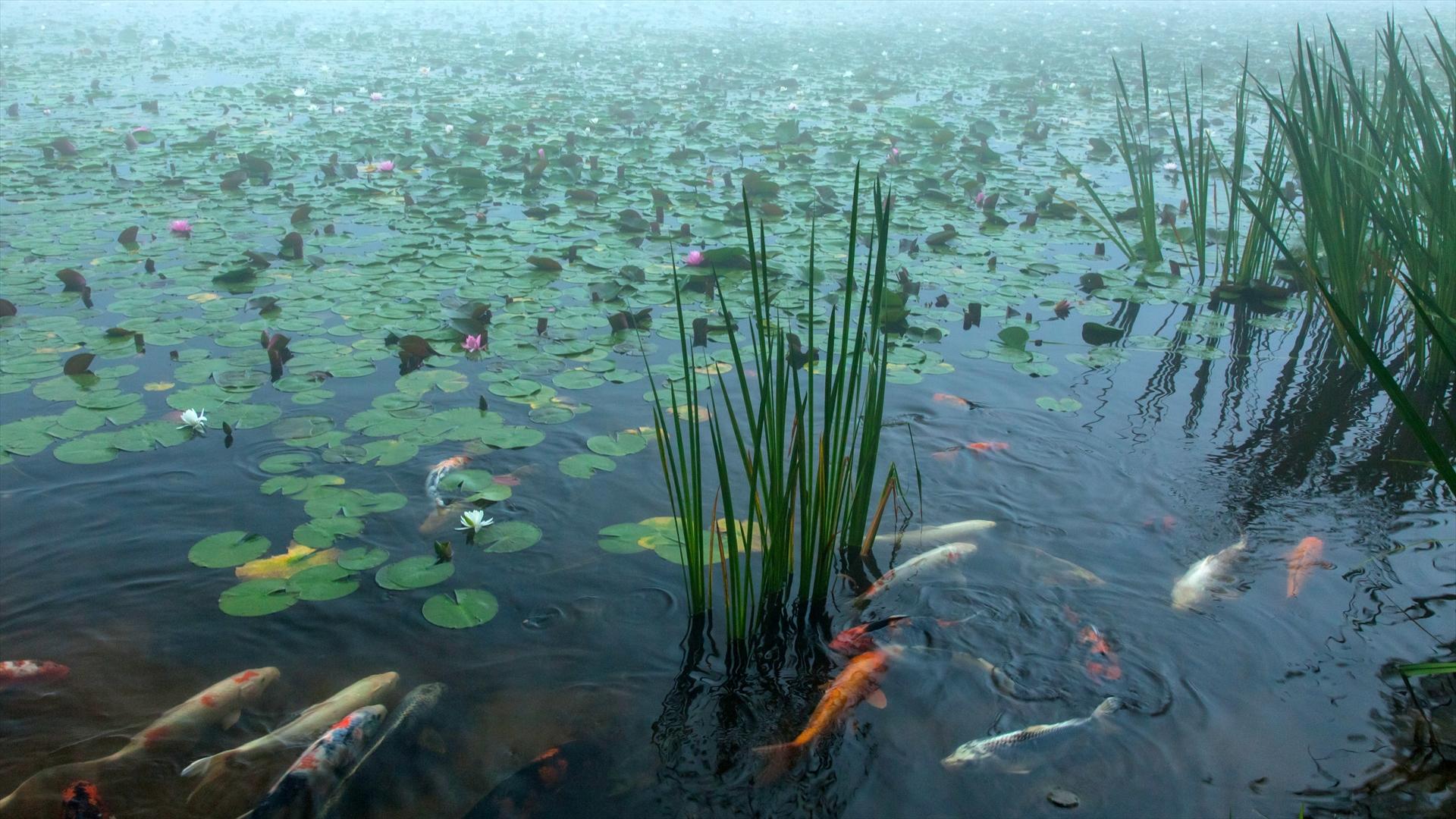 極楽寺山・蛇の池の画像